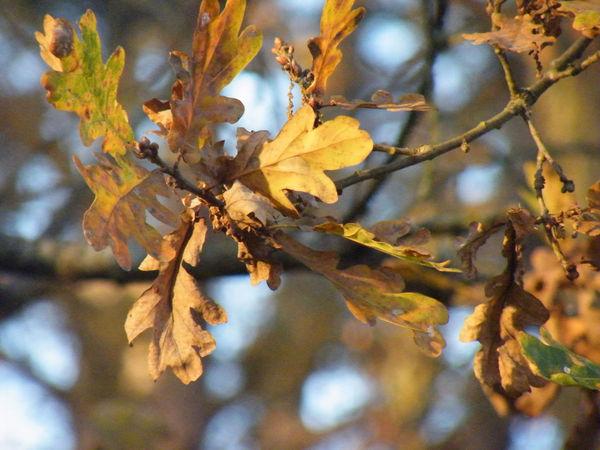 feuilles_d_automne