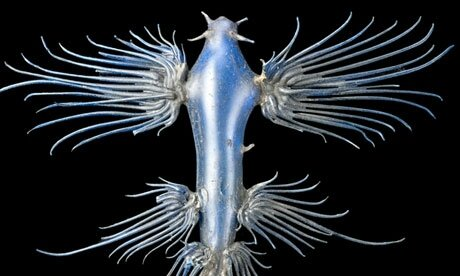 Leopold and Rudolf Blaschka-'s glass models of aquatic creatures