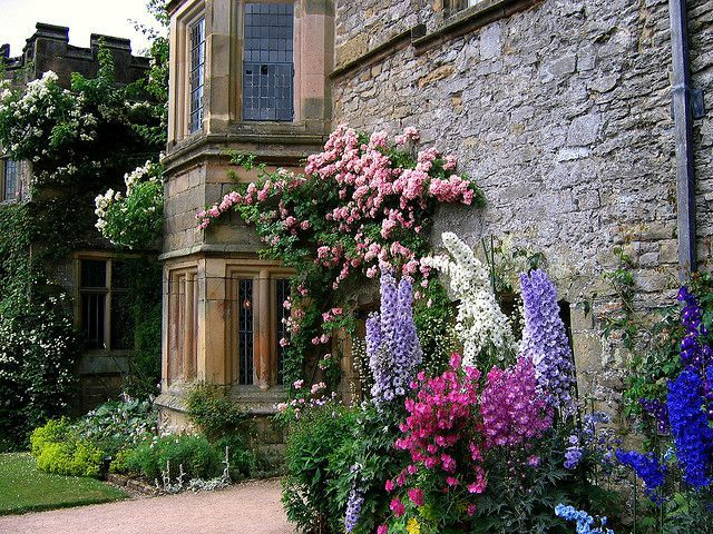 Majestueux delphiniums le cottage de gwladys for Jardin de cottage anglais