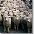 Moutons d' avril....
