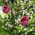 tulipes-careme_2 (1)
