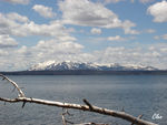 17_June_04___Yellowstone_lake_2