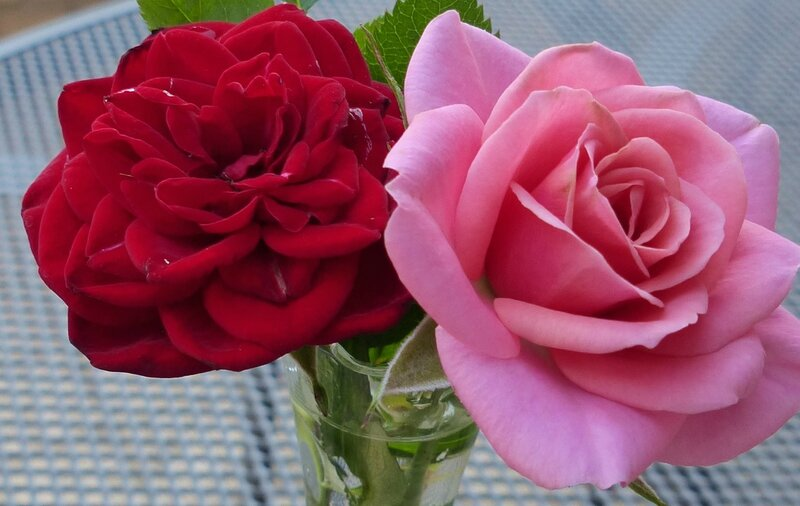 aaa mes roses rouges roses2