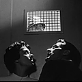 L'invasion des profanateurs de sépulture (invasion of the body snatchers) (1956) de don siegel