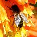 L'abeille emblème des souverains