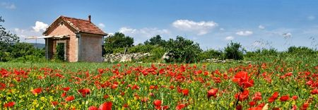 Cabanon_dans_les_coquelicots