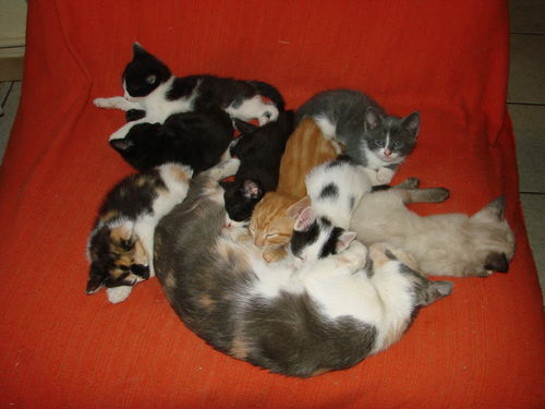 2008 05 02 Papillon avec 8 chatons
