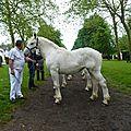 Concours élevage local - rue 2012