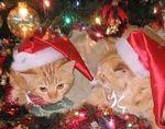 redcatschristmas