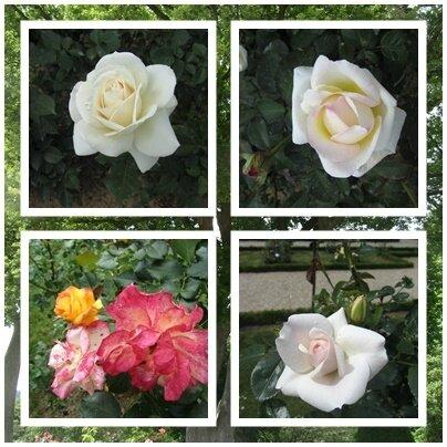 rosesGr3