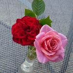 aaa mes roses rouges roses4
