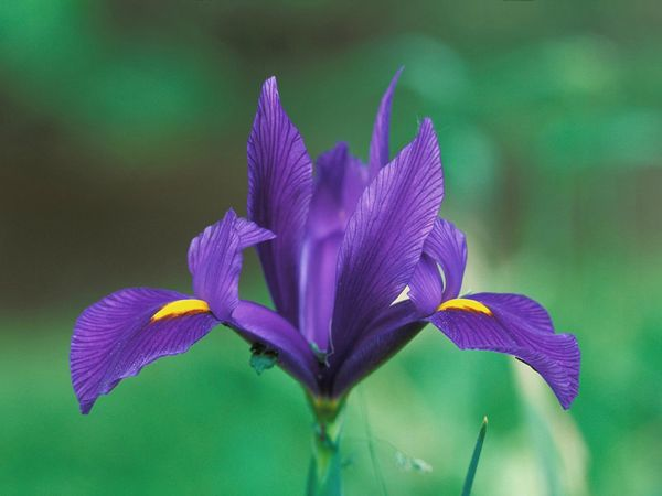fleurs_97