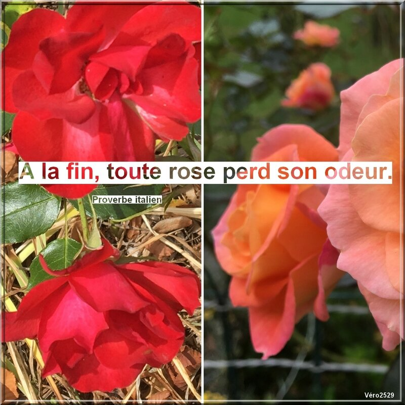 citation rose