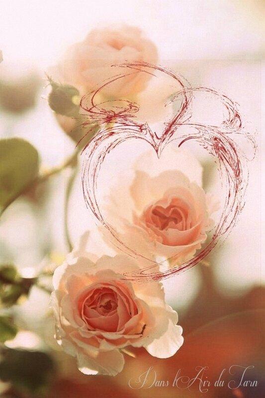 roses Lylou 1