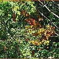 Feuillages automne 03101512