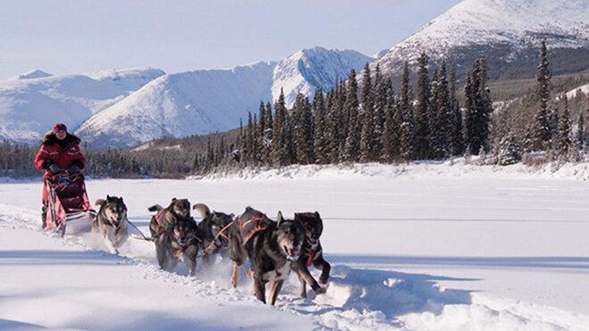 canada-hiver-huskie