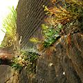 IMG_6360 R1 Ronquières le vieux canal