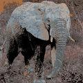 03A. L'élèphant