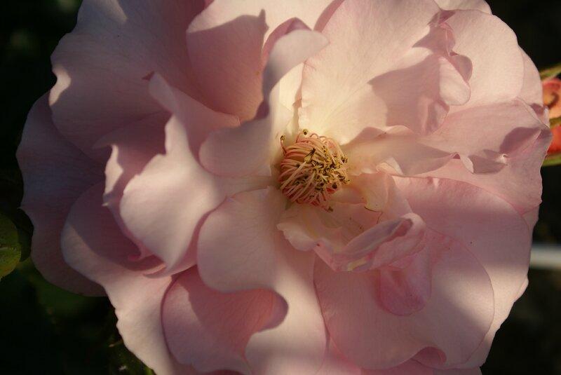 fleurs 037