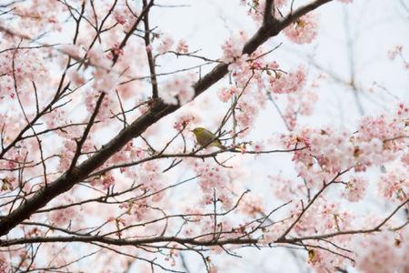 Etre_r_veill__par_les_chants_d_oiseaux_ANCOOK