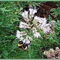 Prairie fleurie 1108155