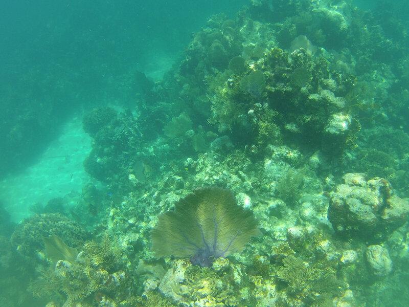 fond sous marin Utila (22)