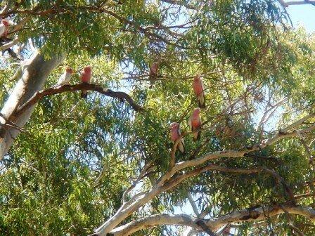 Australie Faune Flore Paysages - janvier 2005 (34)