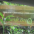 Jungle bay en dominique : un p'tit coin de paradis