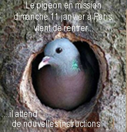 pigeonenmission