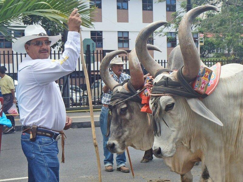 CR 1 San Jose styl 2015 21 procession boeufs