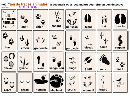 jeu_de_traces_animalieres_SOLUTION