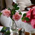 Un peu de rose