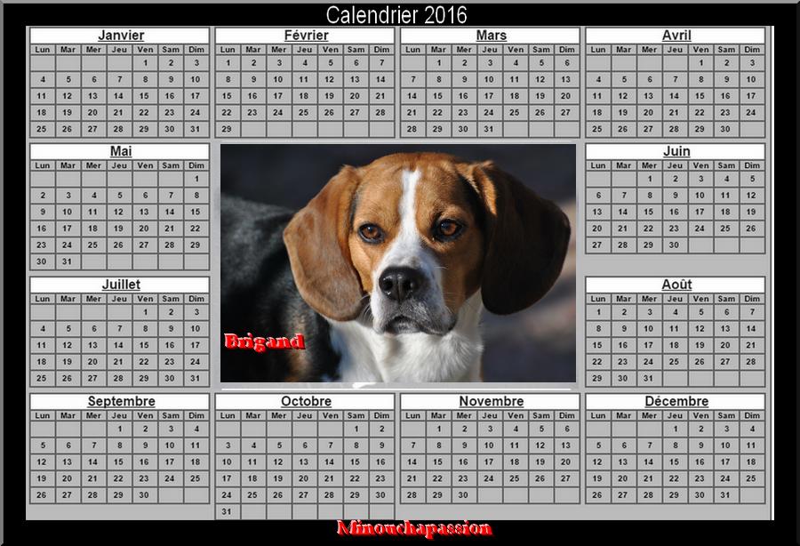 je suis un Beagle , je m'appelle Brigand et m'as maîtresse s'appelle minouchapassion