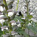 fleurs-de-breche (39)