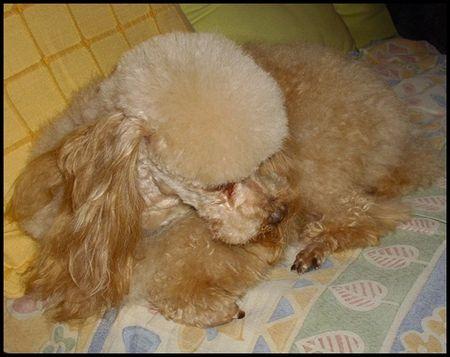 sophie_2008blog