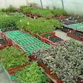la serre de plants
