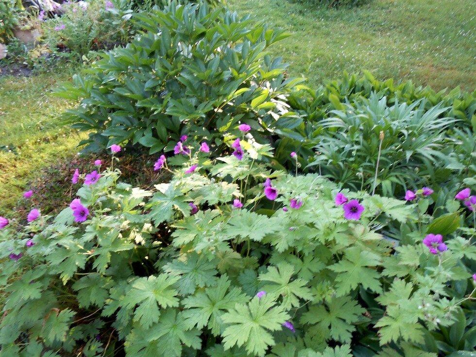 Jardin de cur mamie jeannette jardine for Jardin jardine
