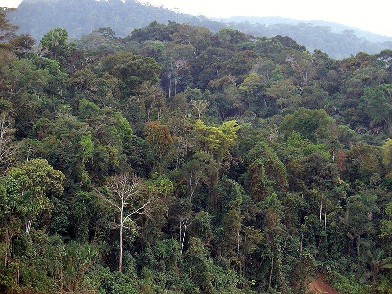 La forêt humide d'Amazonie