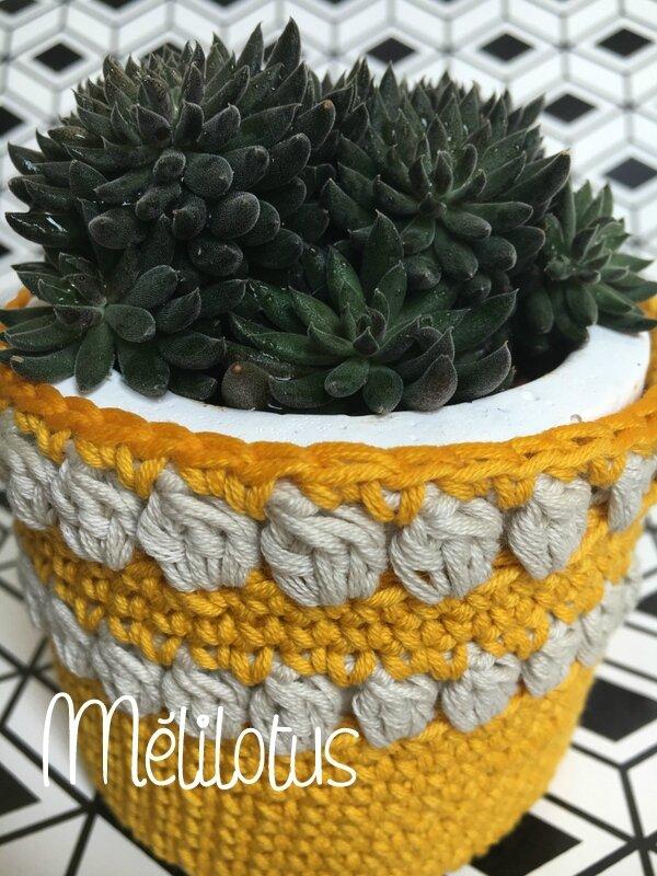 Succulente PotCrochet