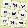 De toutes petites ailes de papillons et de libellules....