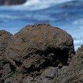 El bollullo-roche volcanique zoomée