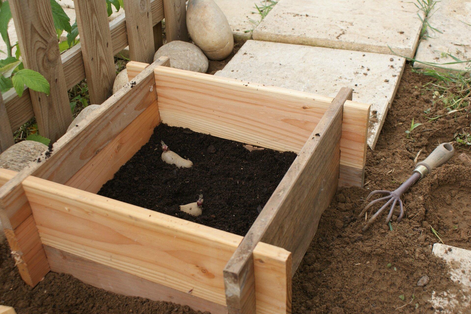 La tour patates by botanic reprend du service 2014 part 1 une brindille au jardin - Quand planter les patates ...
