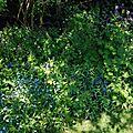 Un coin d'ombre sèche, bleu.