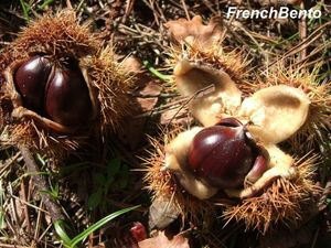 chestnuts_2