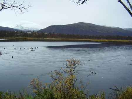 09_10_08_Prestvannet_gel___canards_et_chat___2_