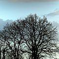 140220-arbres