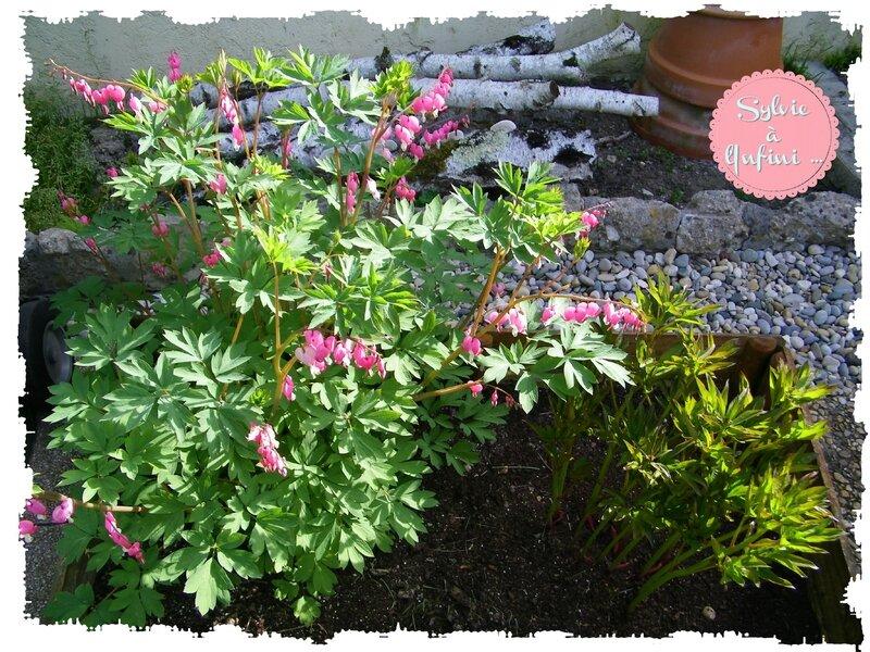 Jardin mi avril 2015 (1)