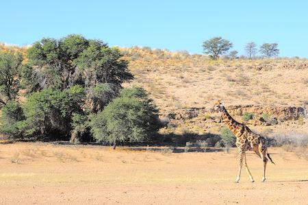 Afrique_du_Sud__95_
