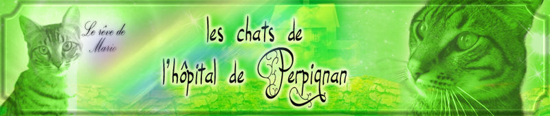 Bannière Les chats de Perpignan