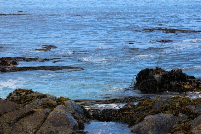 chili santiago et valparaiso avril 2015 (277) [640x480]